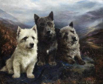Wee three - A West Highland White Terrier, a Scottish Terrier and a